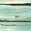 0216 Maritimo pine