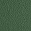 AN-koženka tmavě zelená